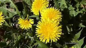 Blumen Im Frühling : blumen in fr hling in hd youtube ~ Orissabook.com Haus und Dekorationen