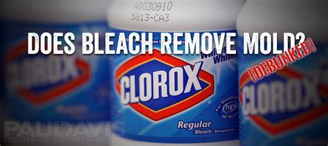Does Bleach Kill Mold? Debunked!  Paul Davis Restoration