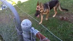contemporary electric dog fence wire gift electrical and With best underground electric dog fence