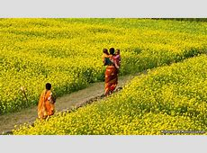 The path through the fields Bangladesh and development