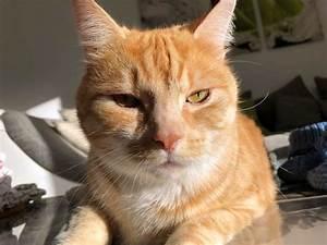 Balkonschutz Für Katzen : baldrian katzenminze ein nat rlicher vollrausch f r katzen ~ Eleganceandgraceweddings.com Haus und Dekorationen