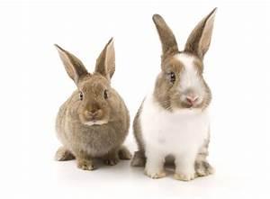 Kaninchenkäfig Für 2 Kaninchen : schluss mit langeweile spielzeug f r kaninchen lindermanns tierwelt haustier magazin web tv ~ Frokenaadalensverden.com Haus und Dekorationen