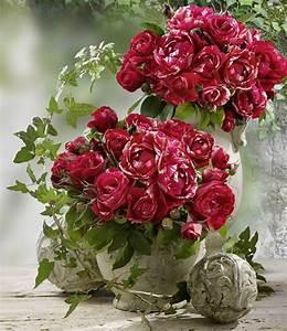 grosse malerrosenr kollektion 1a rosenpflanzen bestellen With französischer balkon mit www baldur garten de rosen