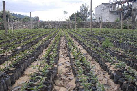 Antigua guatemala coffee plantation can offer you many choices to save money thanks to 21 active results. Guatemala « Riding the Americas