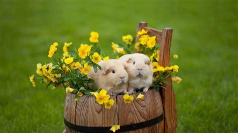Cute Hamster Wallpaper 58 Images