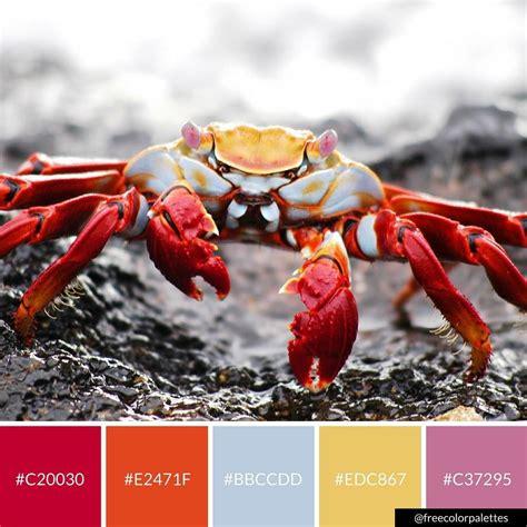 king crab color palette inspiration digital