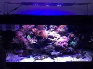 Komplett Aquarium Kaufen : meerwasser aquarium komplett led 500l meerwasseraquarium in friedrichsdorf fische aquaristik ~ Eleganceandgraceweddings.com Haus und Dekorationen