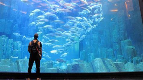 aquarium ile de 28 images mais qui est la sir 232 ne qui vient charmer l aquarium de 3 ile