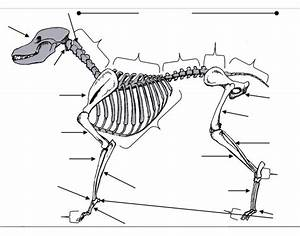 Identify The Dog Skeleton Purposegames