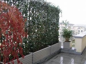 Plantes En Pot Pour Terrasse : brise vue vegetale pour terrasse brise vue 20m idmaison ~ Dailycaller-alerts.com Idées de Décoration