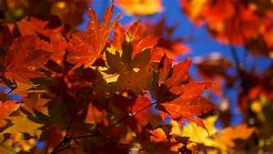 Fall, Wallpaper, Backgrounds, With, Pumpkins, 55, Images