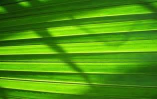 pared verde naturaleza fondos de pantalla pared verde