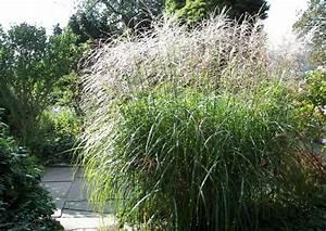 Welches Gras Als Sichtschutz : winterharte hohe ziergr ser elefantengras miscanthus pampasgras bambus ~ Sanjose-hotels-ca.com Haus und Dekorationen
