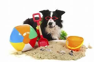 Hundehaare Vom Sofa Entfernen : urlaub mit hund in ckeritz ~ Bigdaddyawards.com Haus und Dekorationen