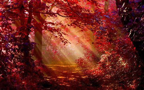 sunlight  autumn forest hd wallpaper background image