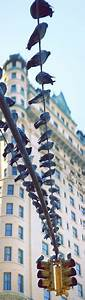 1000+ images about Birds on a wire on Pinterest | Wire ...