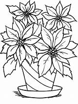 Coloring Flower Pages Poinsettia Clipart Outline Flowerpot Flowers Print Pot Drawing Christmas Charming Printable Clip Cliparts Vase Sheet Leaf Recommended sketch template