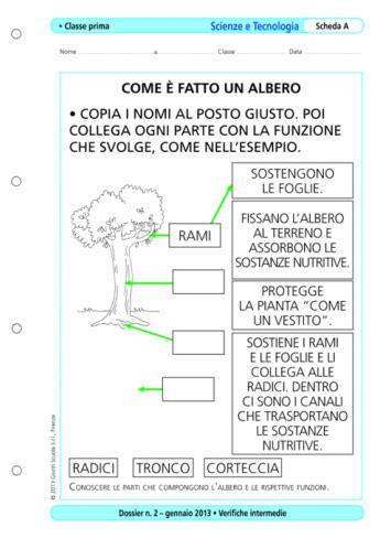 Arte E Immagine Scuola Media Test Ingresso Verifiche Intermedie Scienze E Tecnologia Classe 1 La
