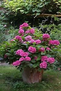 Hortensie Umpflanzen Im Topf : hortensie im hinterhofgarten ~ Orissabook.com Haus und Dekorationen