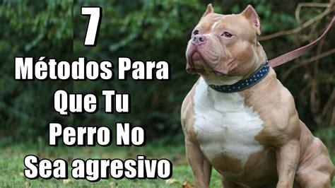 7 Métodos Para Que Tu Perro No Sea Agresivo Ni Peligroso