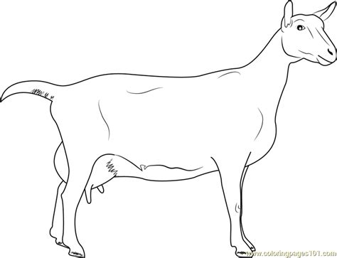 Lamancha Goat Coloring Pages For Adults. Lamancha. Best