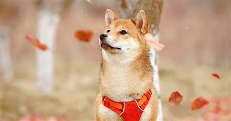 Dogecoin is now 3.5% of the crypto market—and the world's ...
