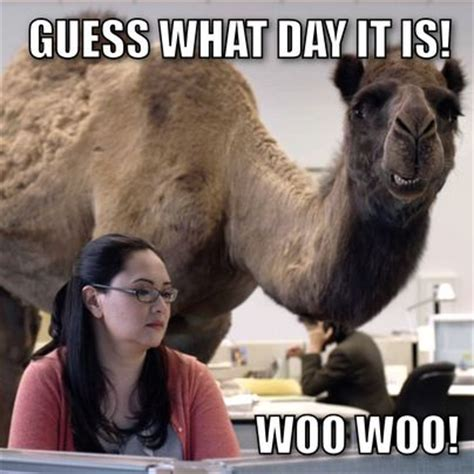 Hump Day Camel Meme - guess what day it is kill the hydra