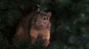 Griswold Christmas Tree Squirrel by Xmas Gifs Find Amp Share On Giphy