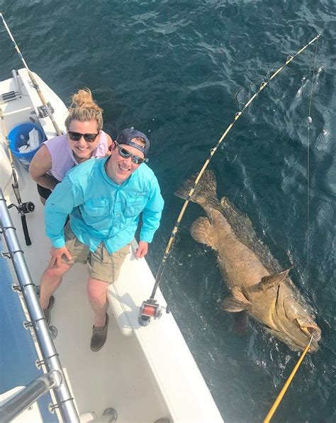 grouper catch gulf california seen foxnews fishermen weighing pounds goliath excited never ve