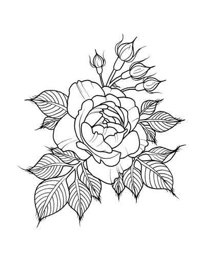 Draw Roses - 81 pages of beautifully hand drawn roses by