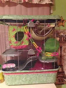 17 Best images about rats n things on Pinterest | Guinea ...