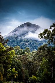 Tropical Rainforest Mountain