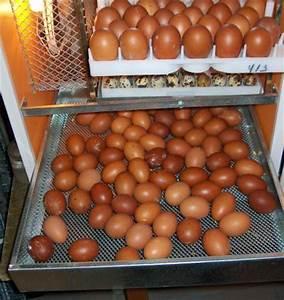 Couveuse Oeuf De Poule : l 39 incubation artificielle ~ Premium-room.com Idées de Décoration