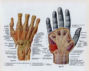 Vintage Medical Page Human Body Diagram Hand By
