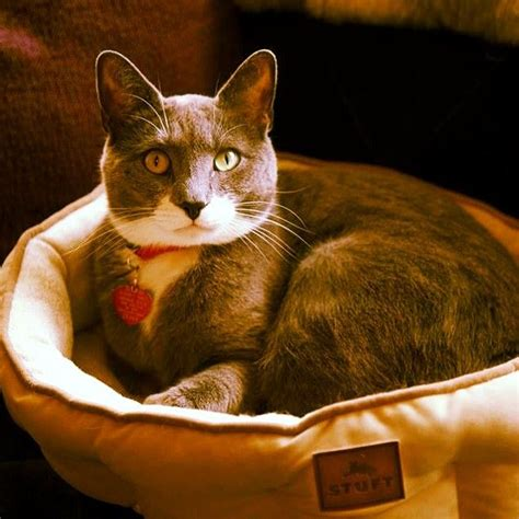 comfy and stylish stuft easy sleeper cat bed r2ppet