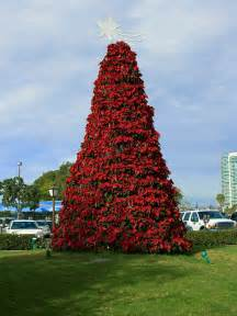 Plantable Christmas Trees Massachusetts by Plant Of The Week Euphorbia Pulcherrima This And That