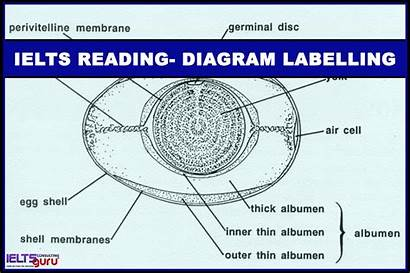 Ielts Diagram Labelling Reading Tag
