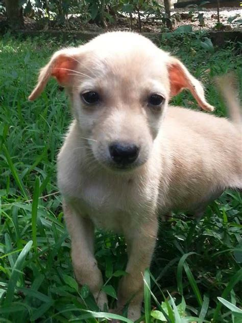 Find A Loyal Best Friend In Sri Lanka  Ee  Adopt Ee   A  Ee  Dog Ee