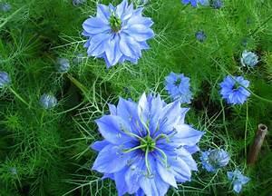 Blumen Bewässern Mit Wollfaden : schneckensichere blumen ~ Lizthompson.info Haus und Dekorationen