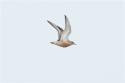 Portland Bird Observatory and Field Centre: 8th August
