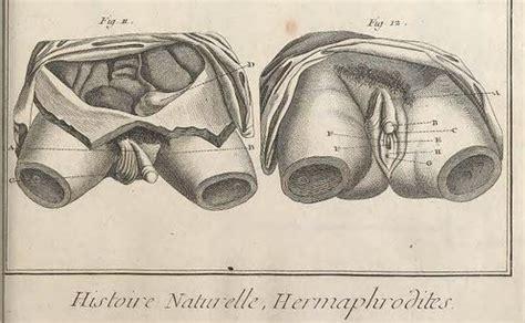 diderot die encyclopedie und die hermaphroditen teil