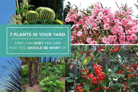 Can You A In Your Backyard by 7 Plants In Your Florida Yard That Can Hurt You And That