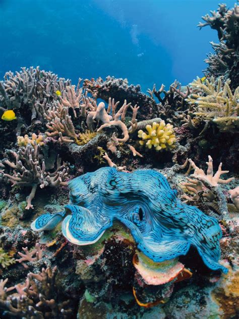 The Great Eight of the Great Barrier Reef | Sport Diver