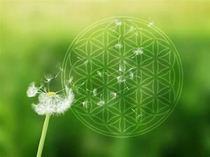 Blume Des Lebens Fensterbild : pusteblume mit blume des lebens auf alu dibond f r aussen ~ Indierocktalk.com Haus und Dekorationen