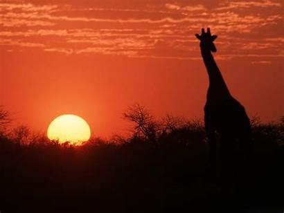 African Desktop Sunset Wallpapersafari Wallpapers