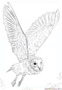 flying barn owl drawing owl flying drawing www pixshark images galleries