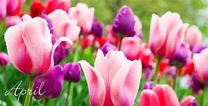 Aktuelle Blumen Im April : aldi s d gartenkalender april ~ Markanthonyermac.com Haus und Dekorationen