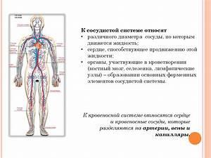 Гипертония и сердечно-сосудистые заболевания