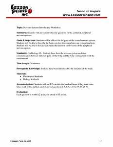 Central Nervous System Lesson Plans  U0026 Worksheets