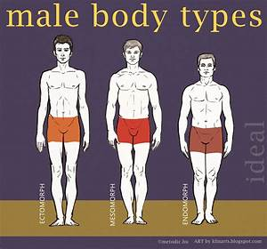 Male Body Types Illustrations | Male Models Picture